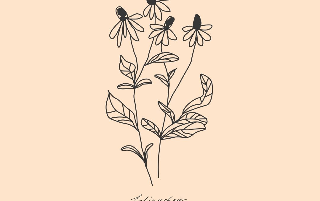 Branding Identity Illustration Echinacea Naturkost Naturkosmetik