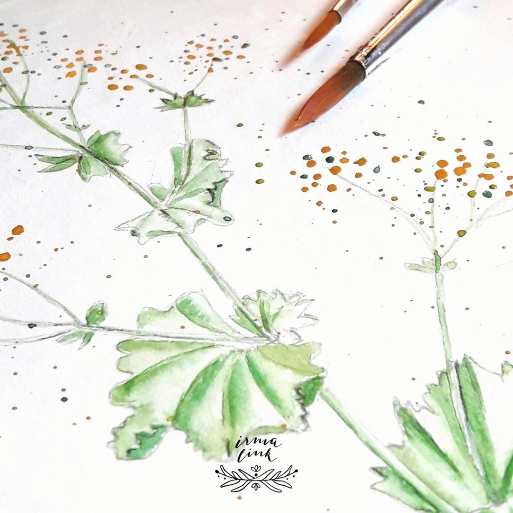 Pflanzenillustrationen für Branding Identity, Frauenmantel Naturkost Naturkosmetik