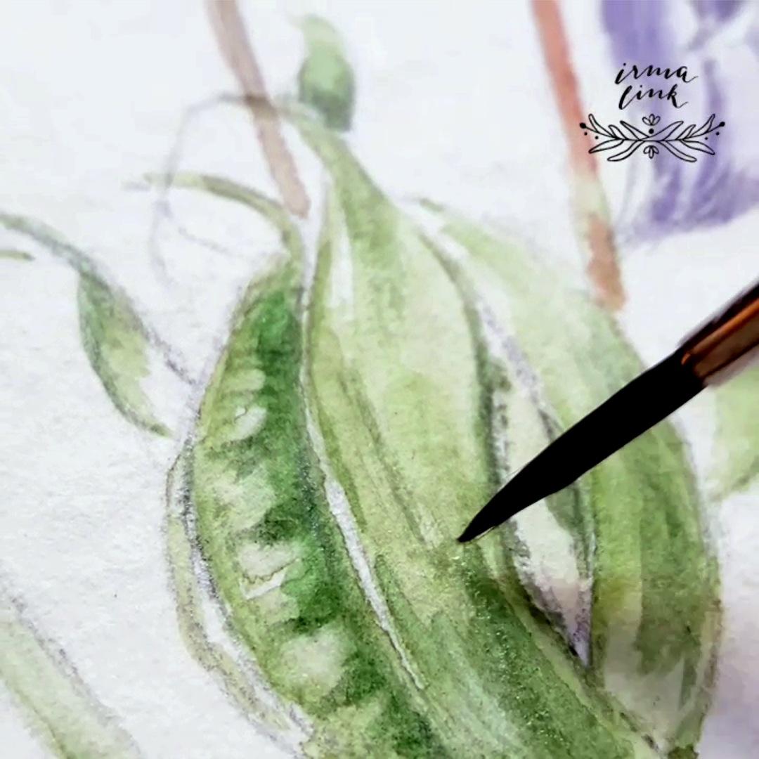 Pflanzenillustration für Branding Identity, AKELEI, Aquilegia vulgaris Naturkost Naturkosmetik