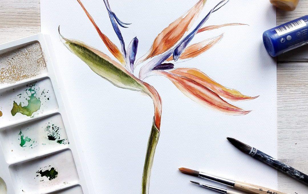 Pflanzenillustrationen Strelizie Botanik von irma link, Illustratorin