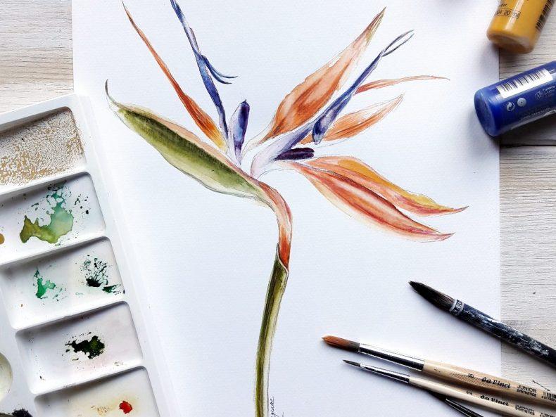 Pflanzenillustration Strelizie Botanik von irma link, Illustratorin