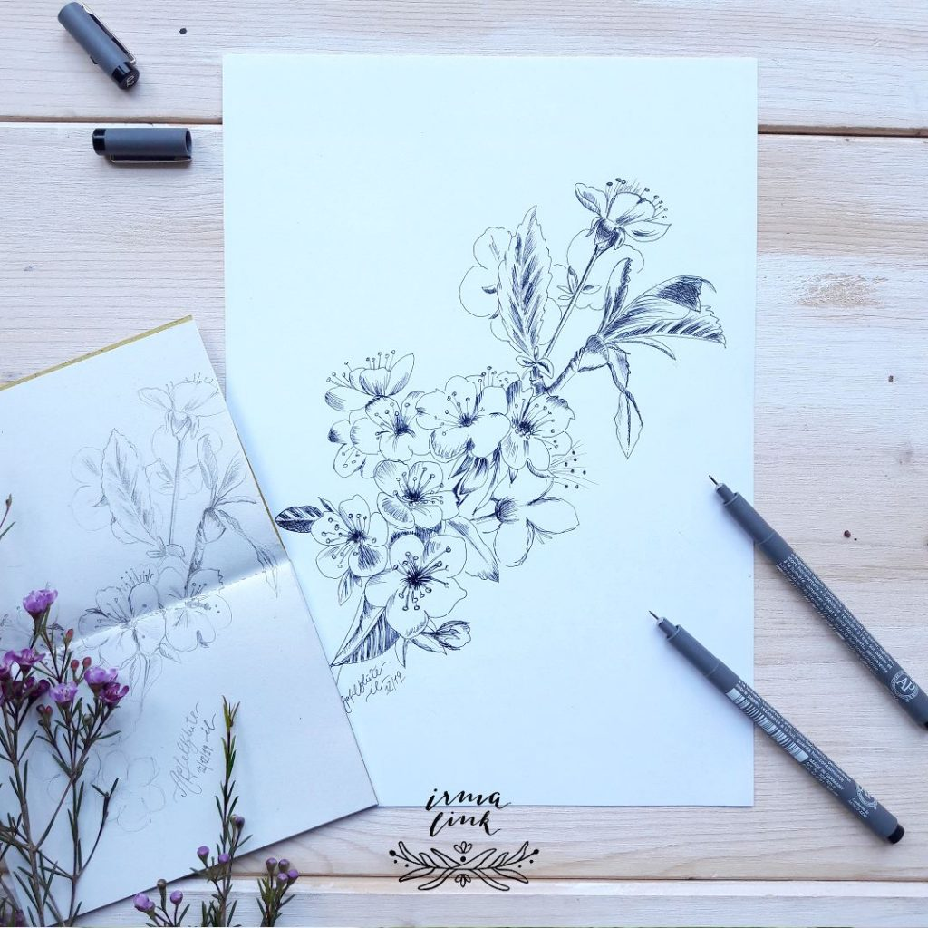 Pflanzenillustrationen Bäume Apfelblüte für Signets Verpackung und Werbung irma link Illustratorin