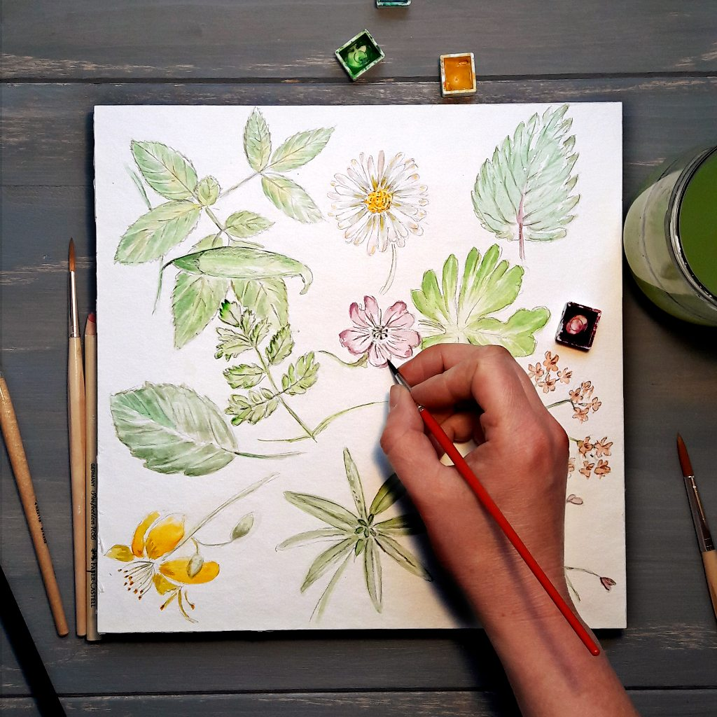 Work Pflanzenillustration Wiesen Blumen Blüten Illustratorin Workshop irma link