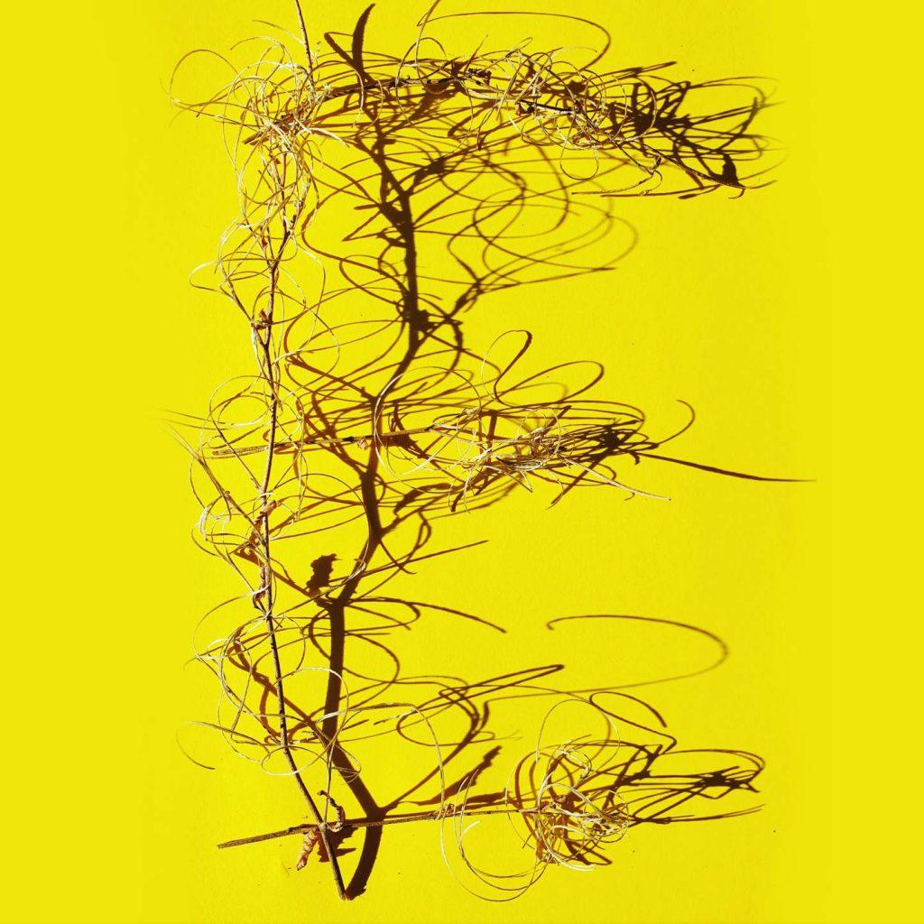 pflanzen-lettering-grossbuchstabe-e-christine-irmalink-kalligraphie