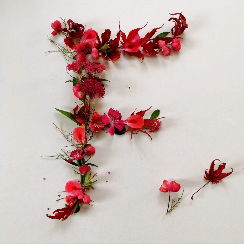 pflanzen-alphabet-lettering-grossbuchstabe-f-uta-irmalink-kalligraphie