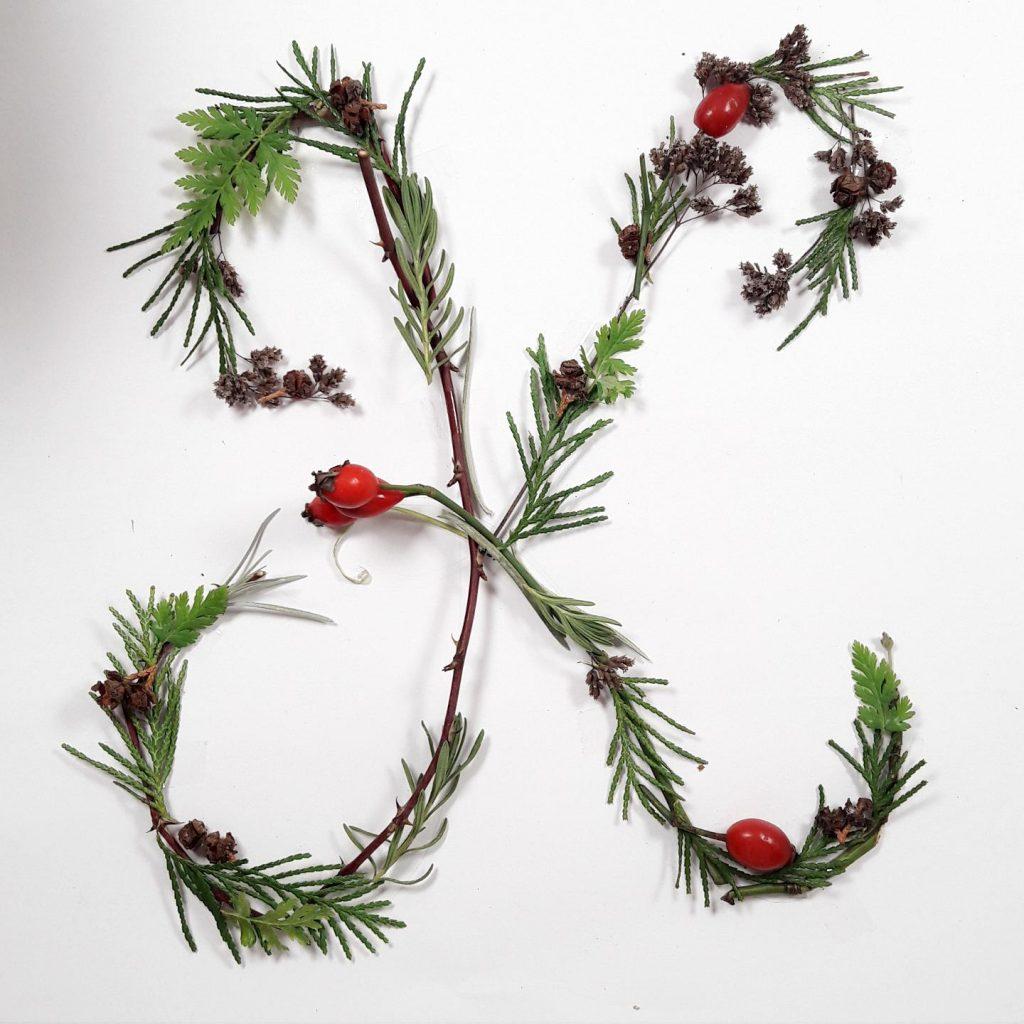 pflanzen-alphabet-lettering-grossbuchstabe-k-irmalink-kalligraphie