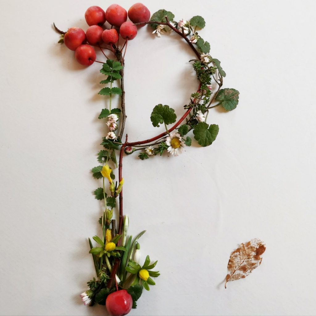 pflanzen-alphabet-lettering-grossbuchstabe-p-uta-irmalink-kalligraphie